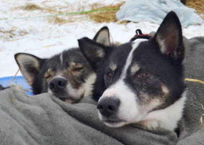 hundeschlittenrennen3