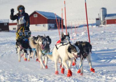 hundeschlittenrennen9