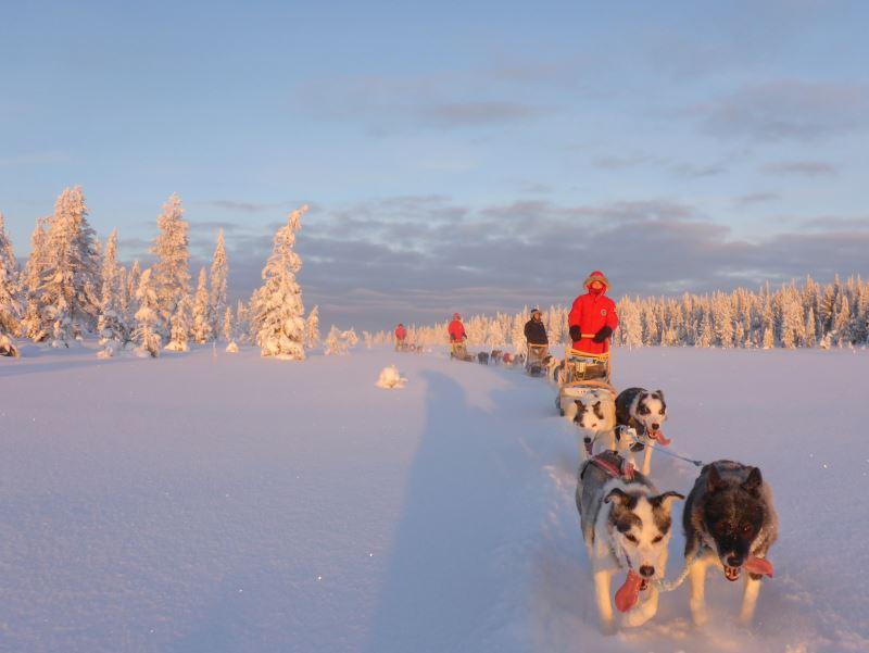 Familie auf Hundeschlittentour an Silvester