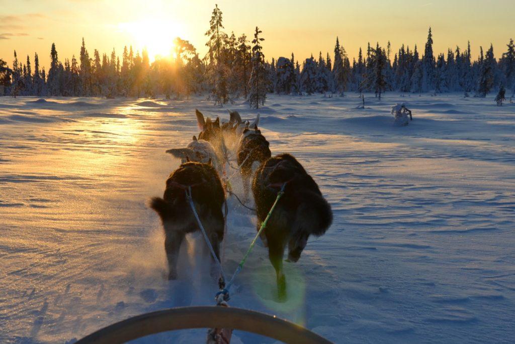 Husky-Tour der Sonne entgegen