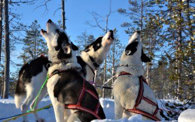 Der Februar in Lappland