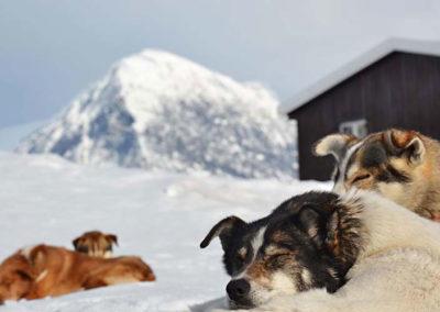 fjaelltour-ruhende-hunde
