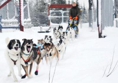 hundeschlittenrennen2