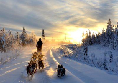 magische Hundeschlittentour im Dezember