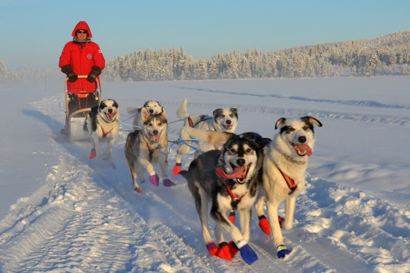 Hundeschlittentour bei klirrendender Kälte