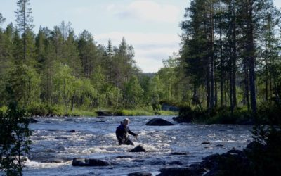 Der Fliegenfischer-Sommer in Lappland